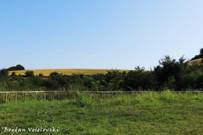 Landscape in Srebarna Nature Reserve