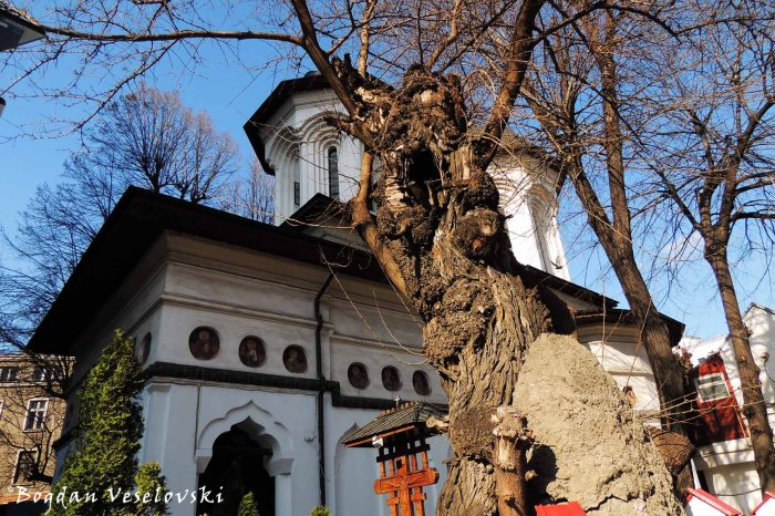 21, Batiștei Str. - Biserica Adormirea Sfintei Ana - Batiste (Dormition of Saint Anne Church, Bucharest, 1786 & 300 years old mulberry tree)