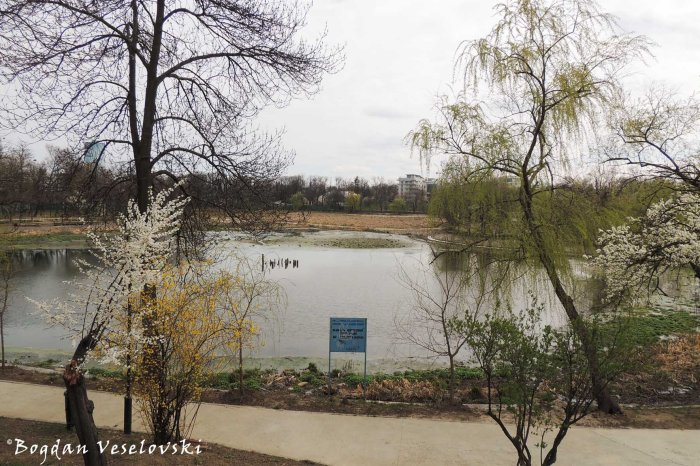 Bordei Park & Floreasca Lake