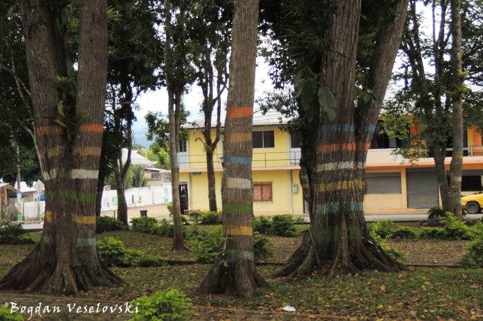 Stripy trees