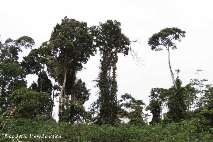 High vegetation