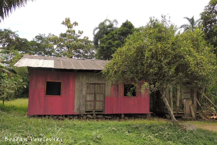 Pink wooden house