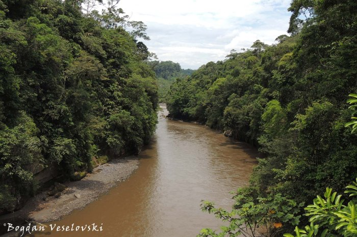 Browny river from the rains
