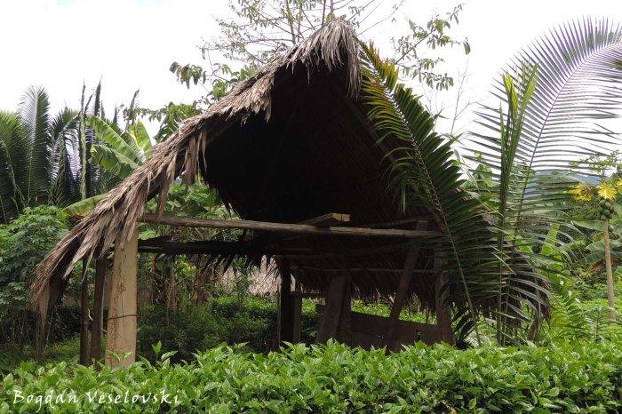 Palmleaf-roofed shelter