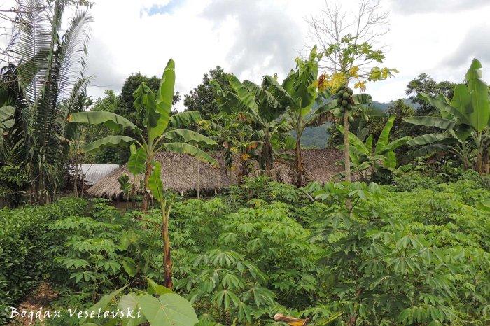 Amazonian residence