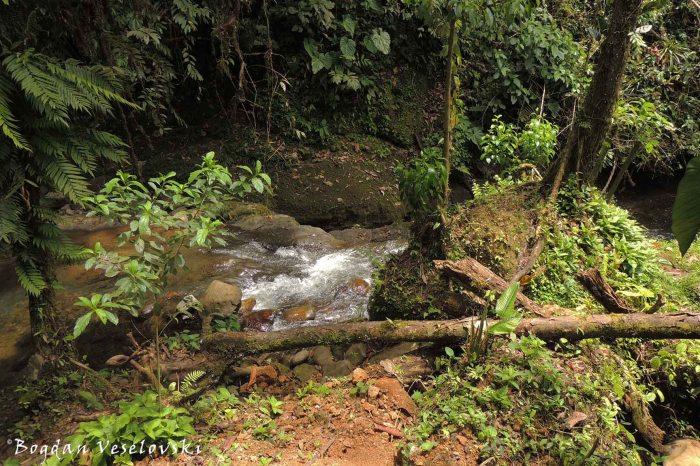We've found the stream!