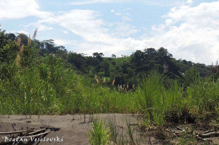Hot sand and green environment