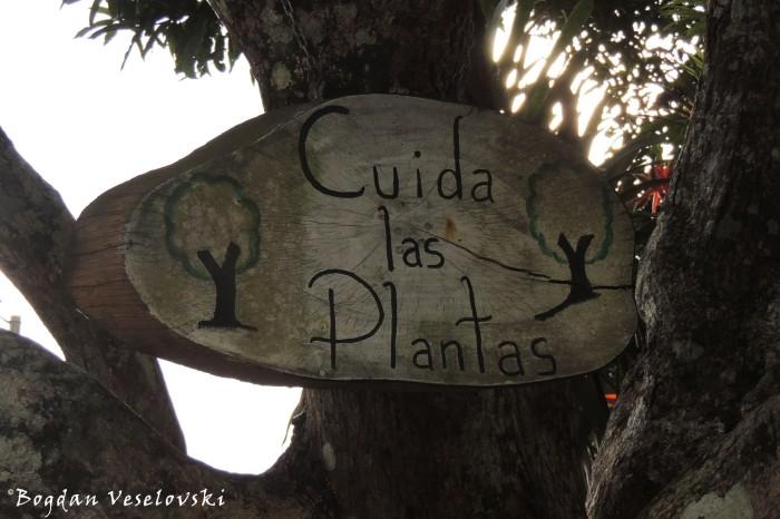 Cuida las plantas (Care for the plants)