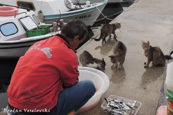 Fish beggars