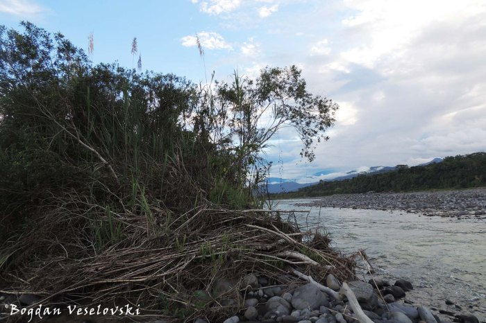 River shore