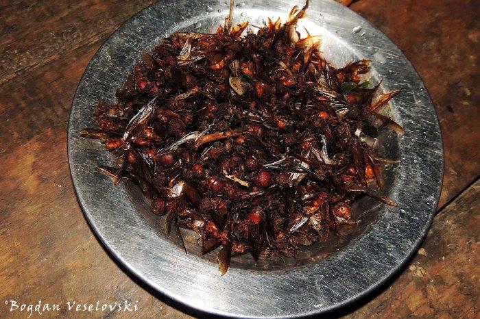 Añango, hormigas culonas; Yarush (flying ants)