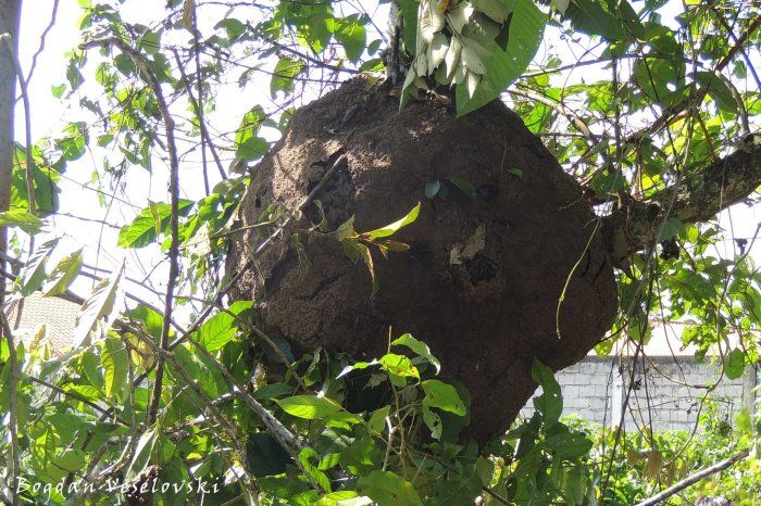 Ant house
