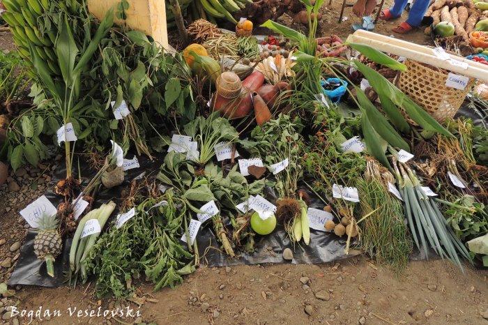 Agro fair