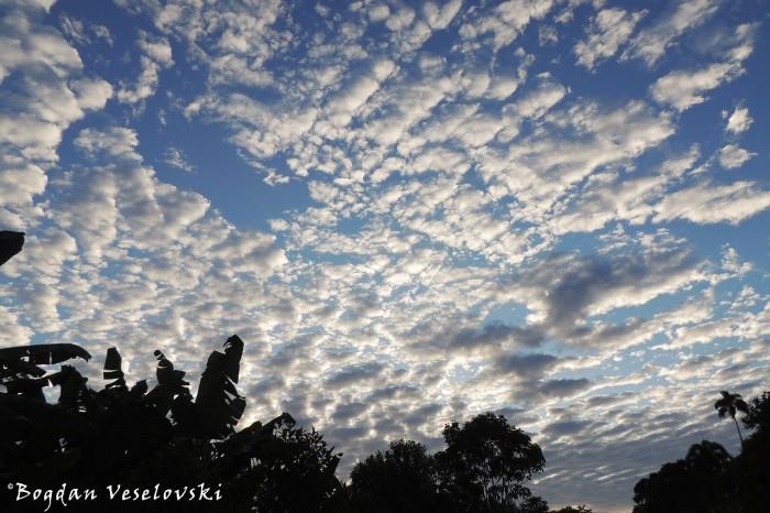 Wooled sky