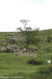 Hitite tree