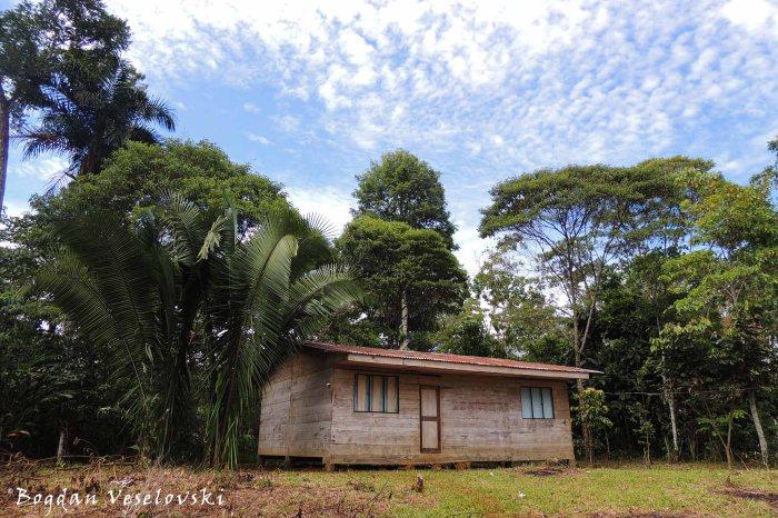 Amazonian dwelling