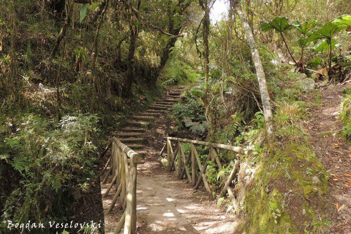 Reserva Ecologica Cotacachi Cayapas