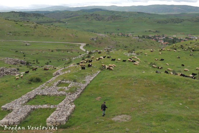 Herding through ruins