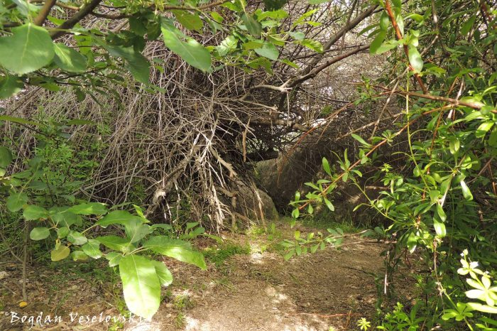 Crawling in the Love Valley's thicket