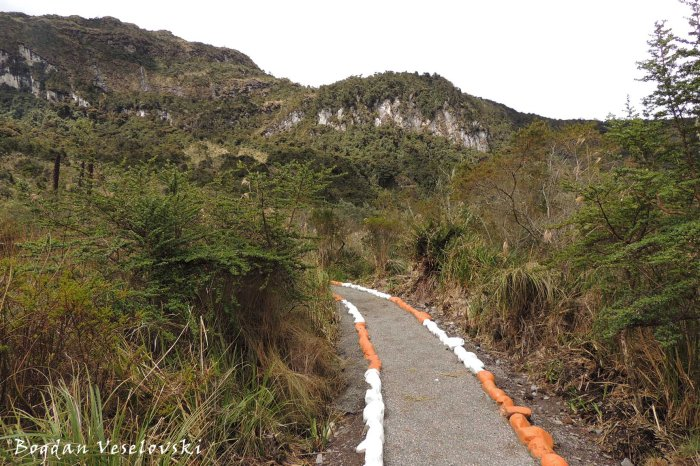 Polylepis trail