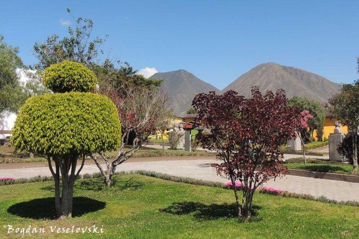 Arboreal scenery
