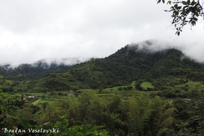 Bosque nublado (The cloud forest)